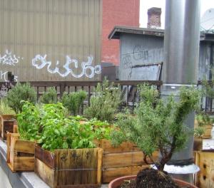 Steve's rooftop garden v2