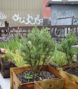 Steve's rooftop garden